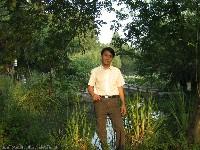 瘦海棠的照片